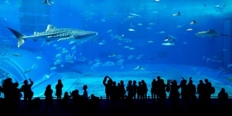 Aquarium öffentliches Aquarium
