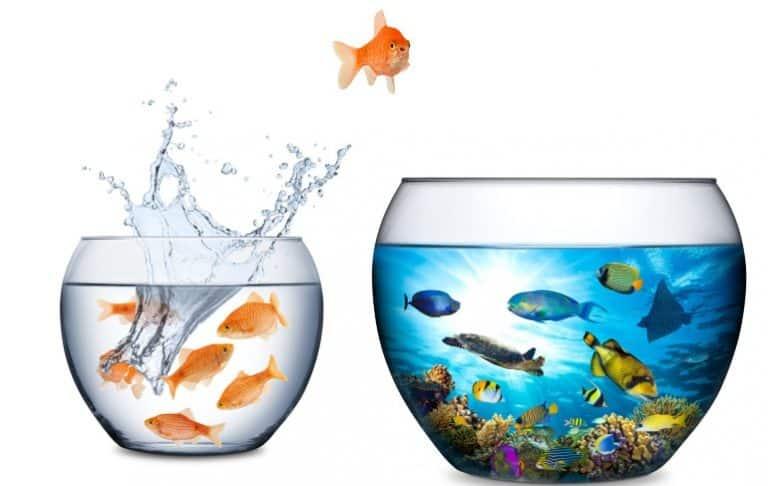Aquarium zwei Aquarien