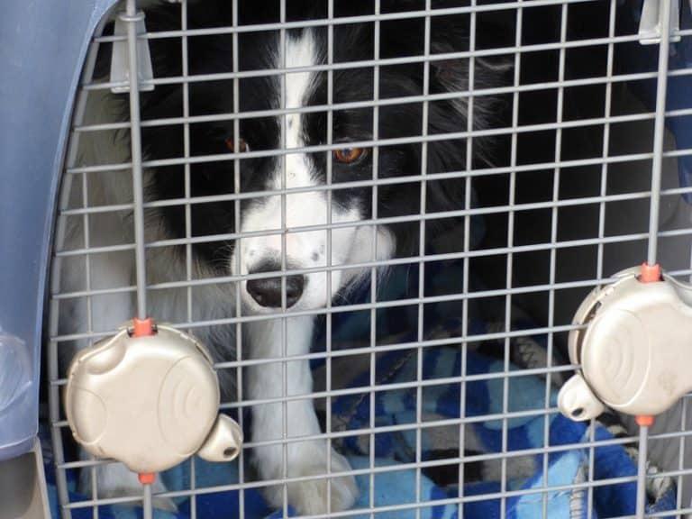 Hund in einer Transportbox