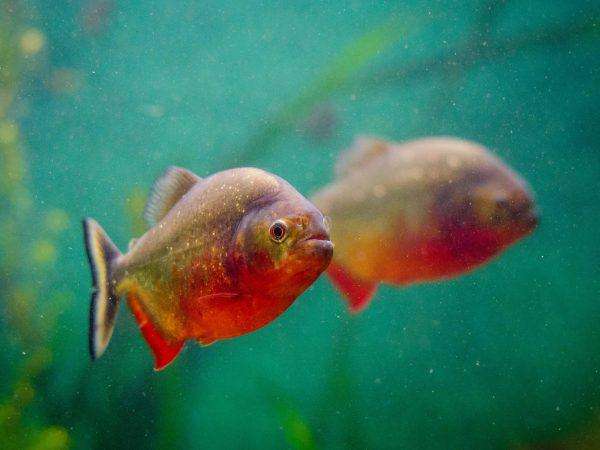 Aquarium: Test & Empfehlungen (01/20)