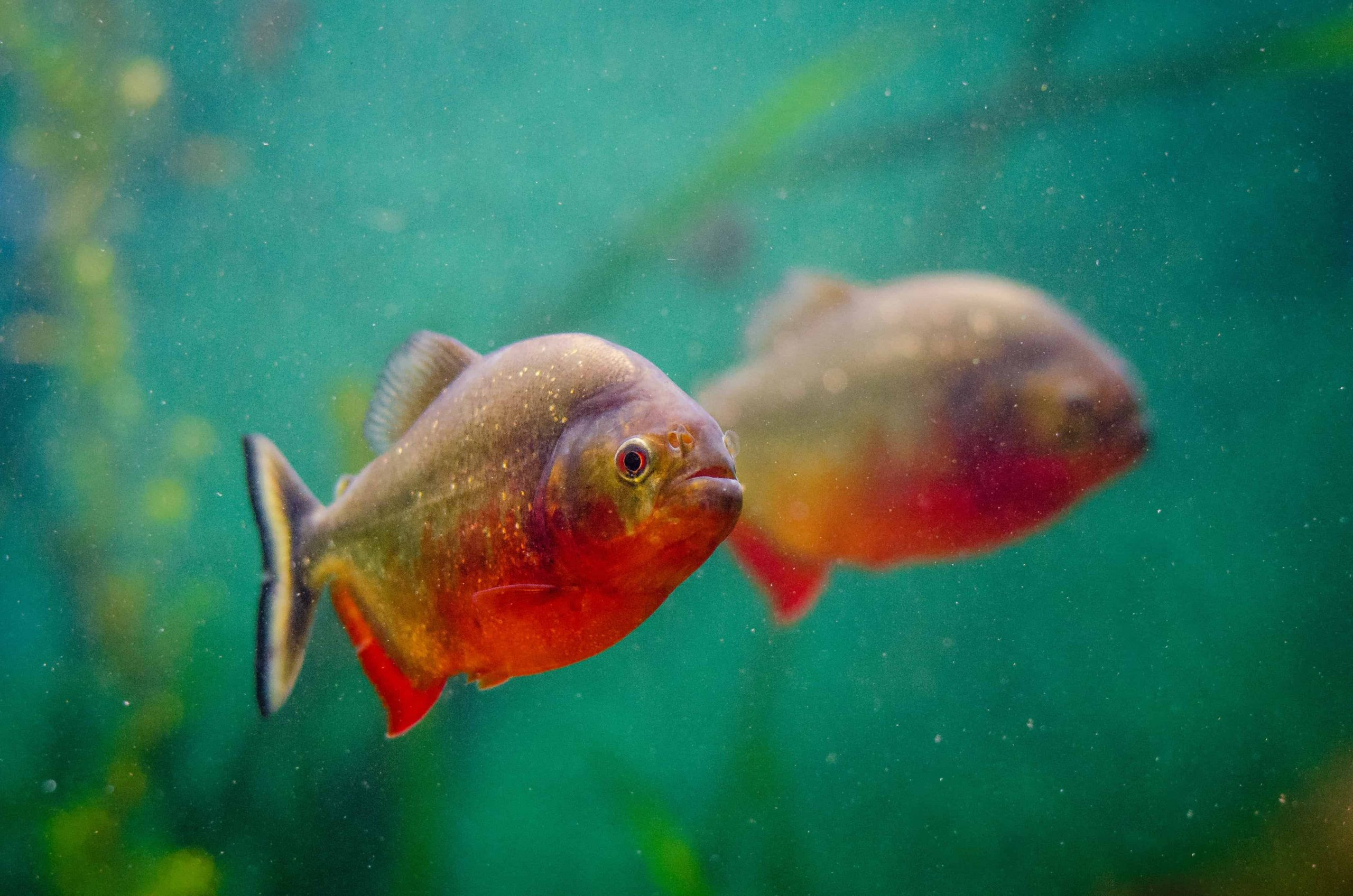 Aquarium: Test & Empfehlungen (11/20)