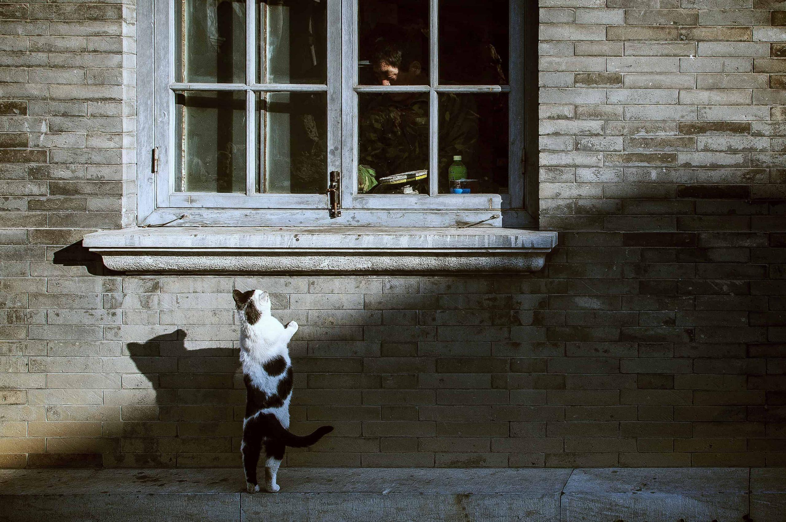GPS für Katzen: Test & Empfehlungen (09/20)
