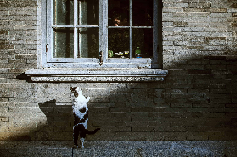 GPS für Katzen: Test & Empfehlungen (01/20)