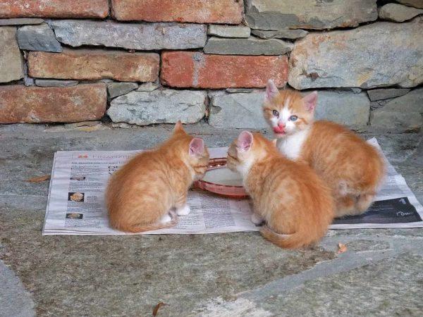Barf Katzenfutter: Test & Empfehlungen (01/20)