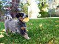 Hundenassfutter:  Test & Empfehlungen (01/21)