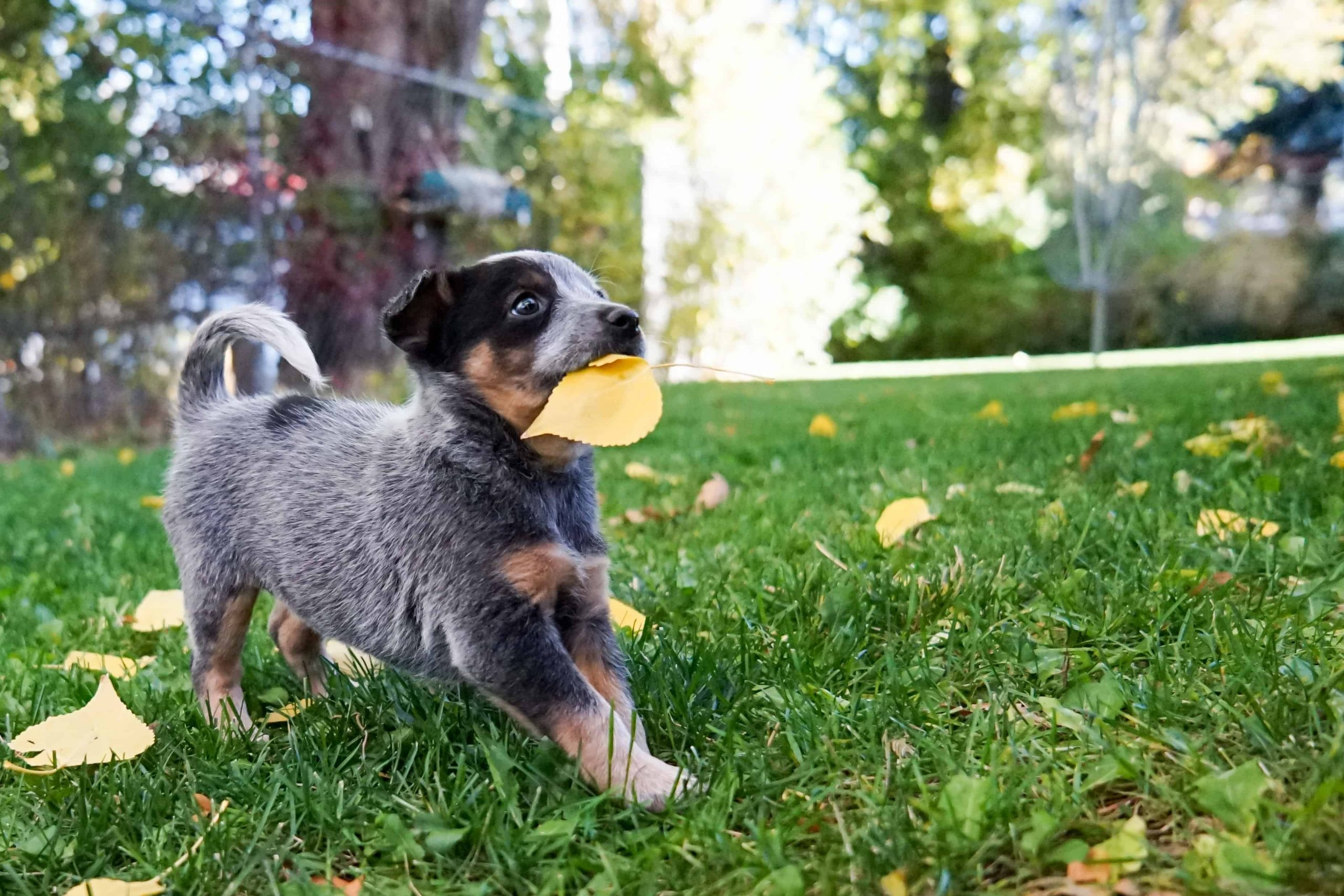 Hundenassfutter:  Test & Empfehlungen (07/20)