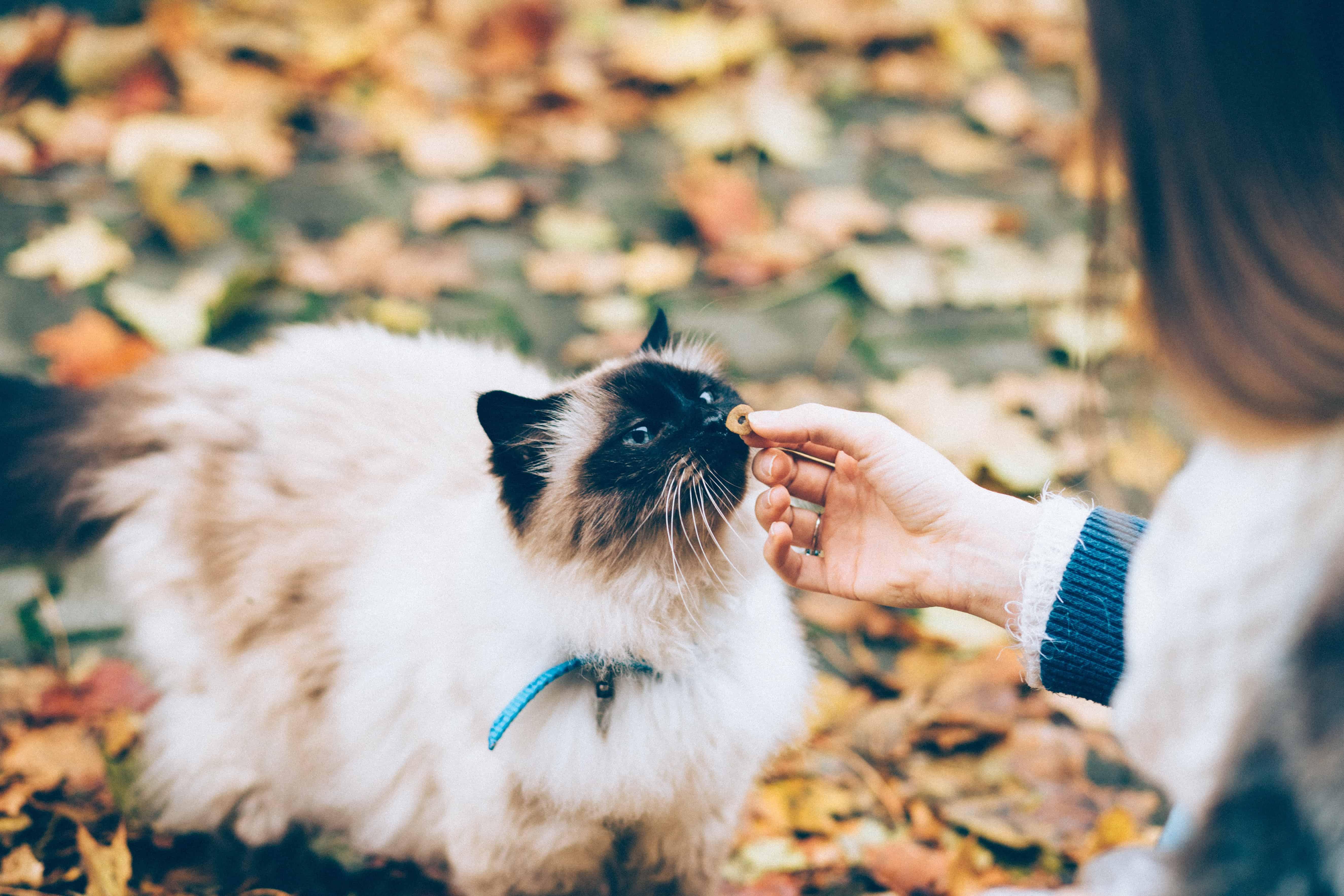 Katzentrockenfutter: Test & Empfehlungen (01/20)