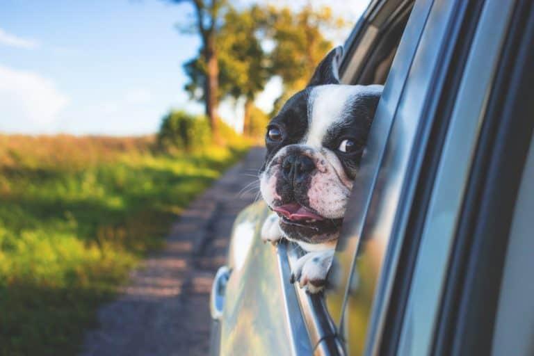 Die Preise für Hundekaefige liegen zwischen 20 und 100 Euro.