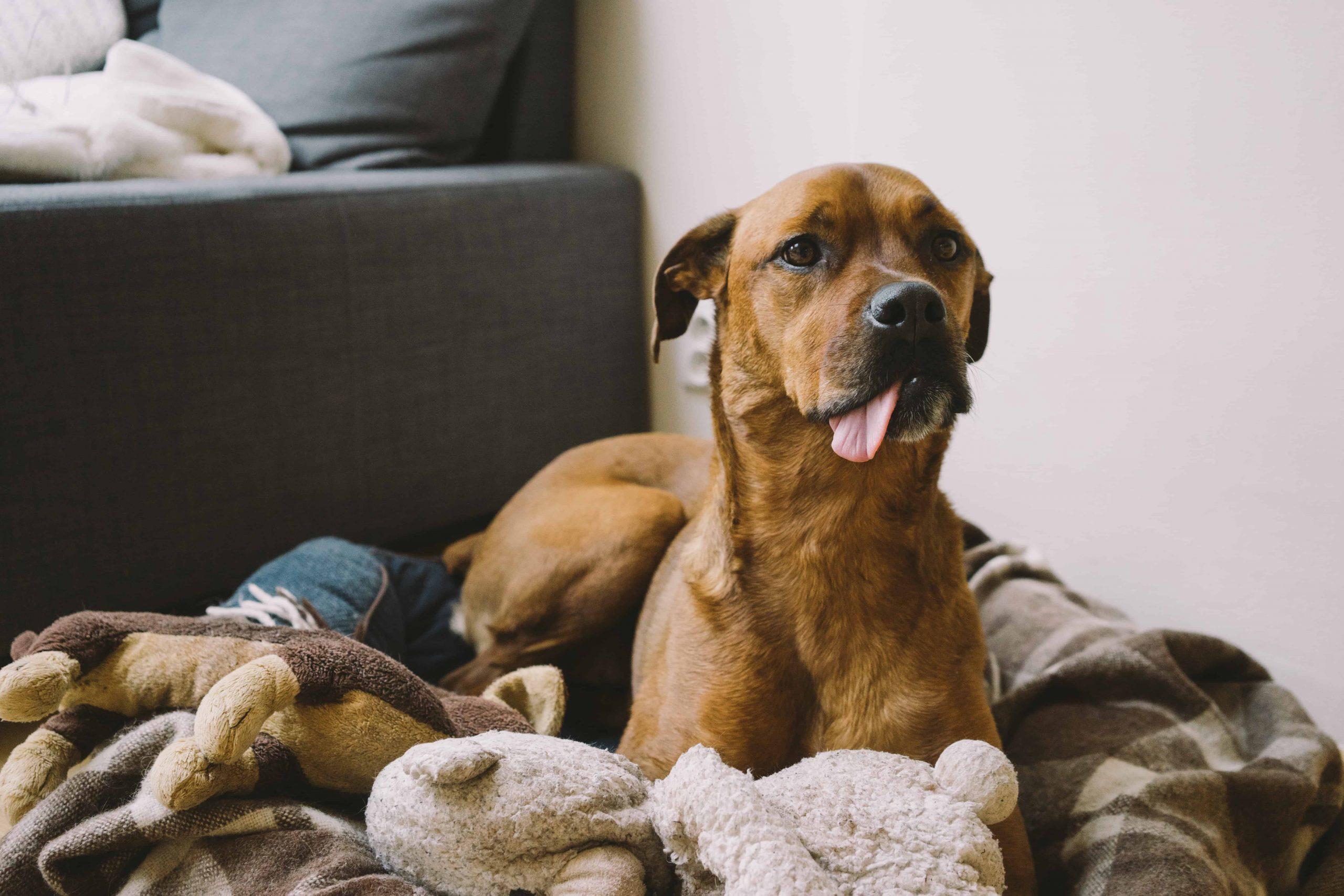 Hundespielzeug: Test & Empfehlungen (03/21)
