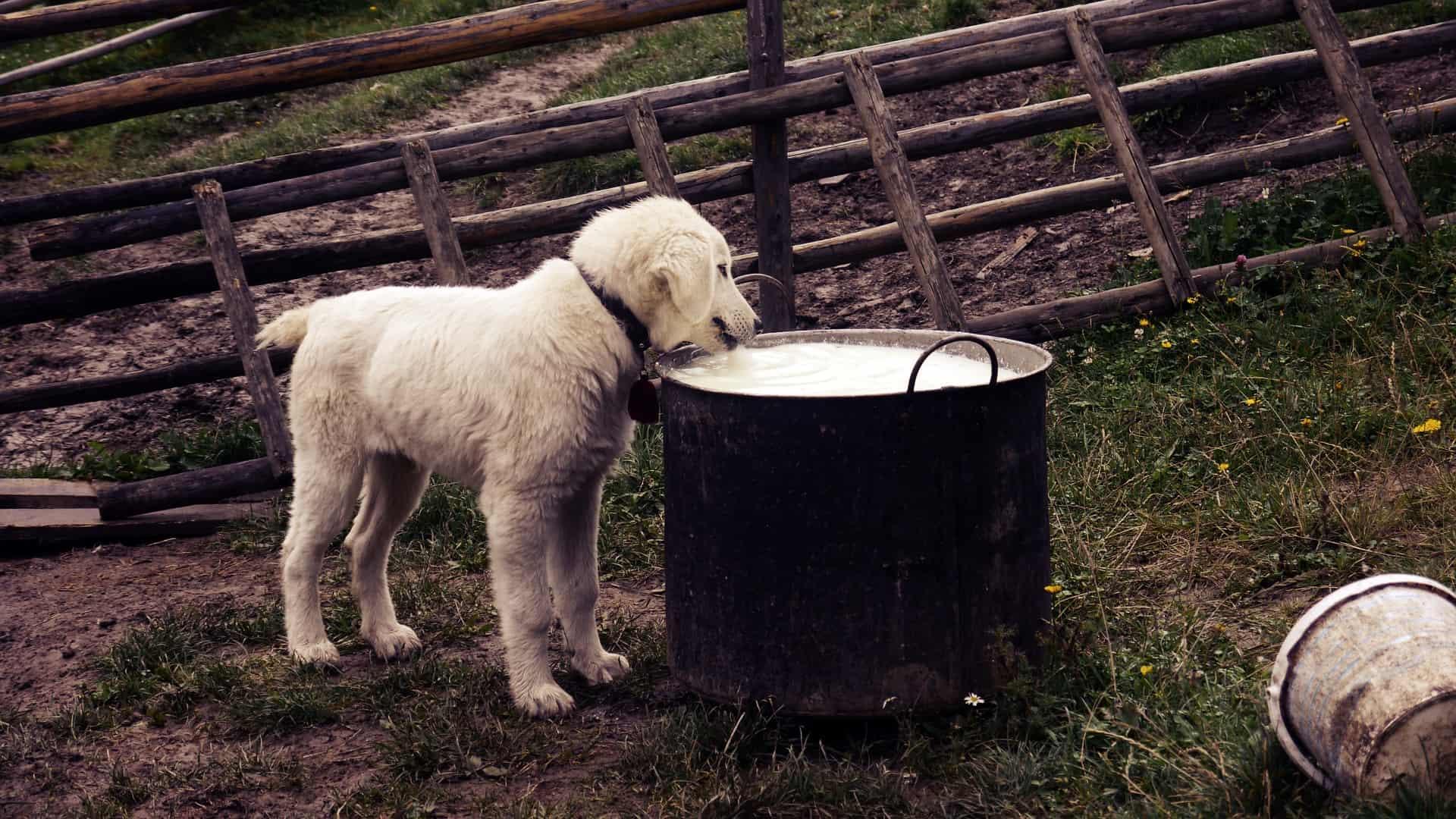 Welpenmilch: Test & Empfehlungen (04/21)