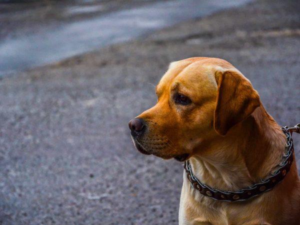Hund mit Halsband am Straßenrand