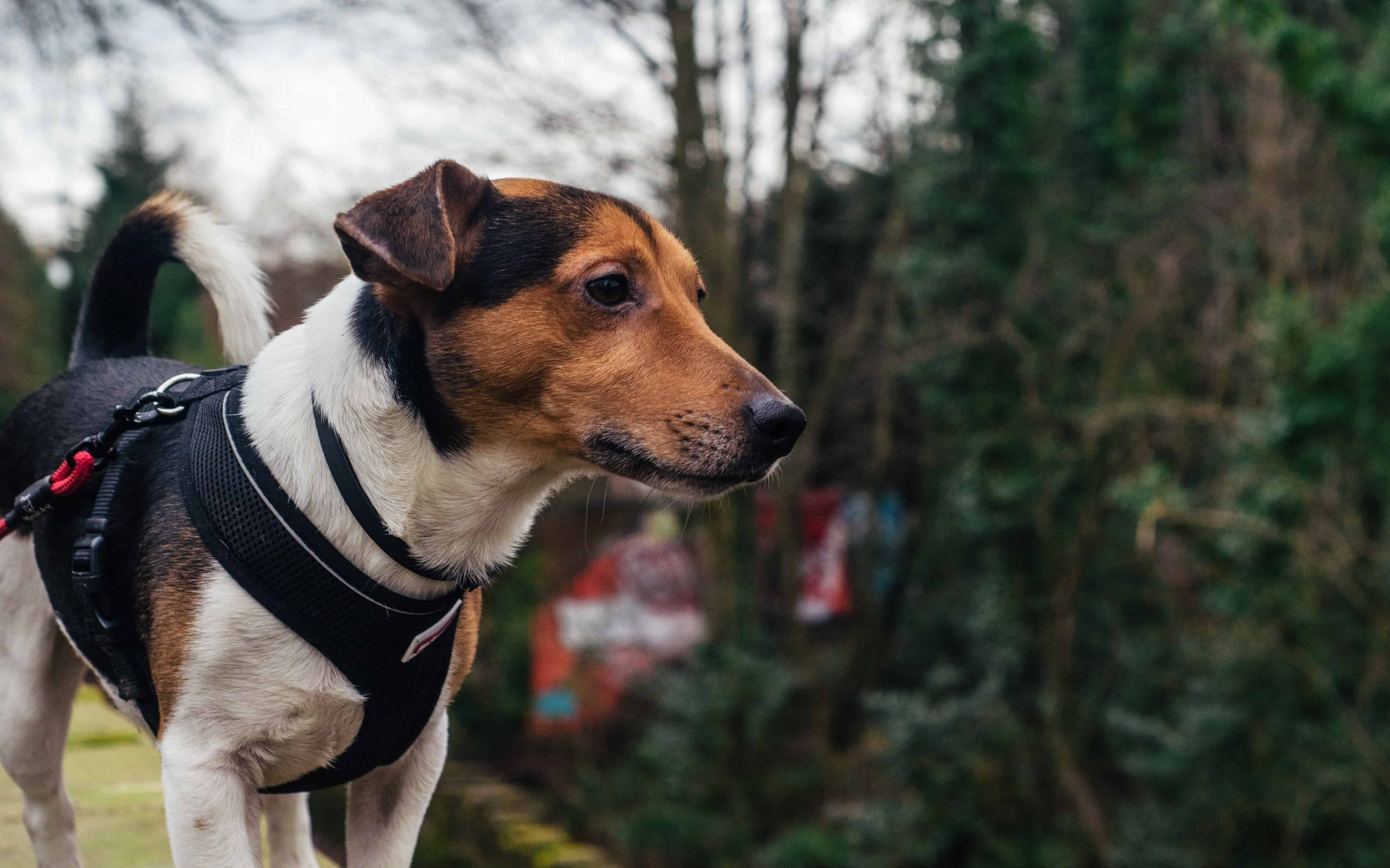 Hundegeschirr: Test & Empfehlungen (04/21)