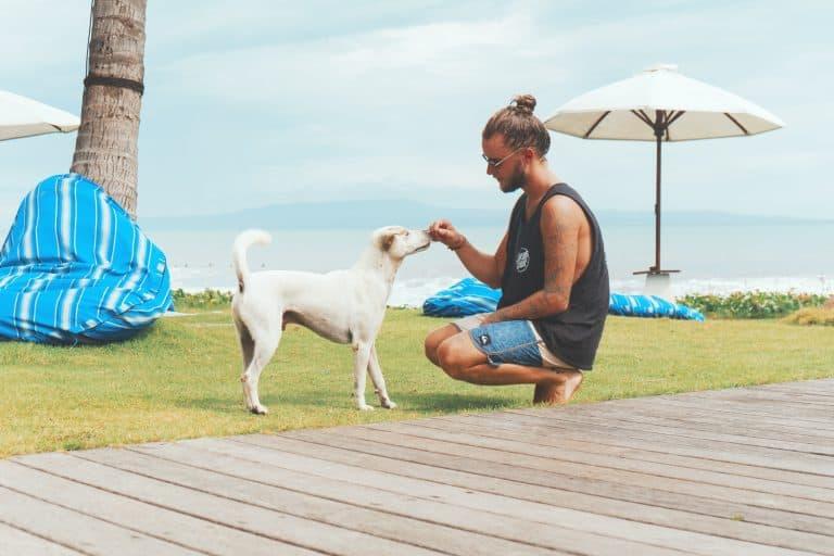 Mann gibt Hund ein Leckerli im Garten