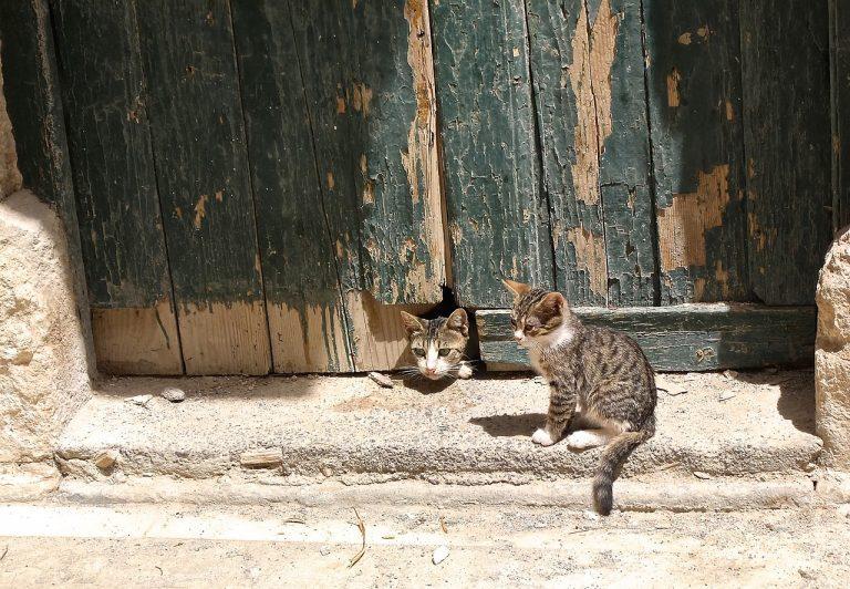 Zwei Katzen bei alter Holztür