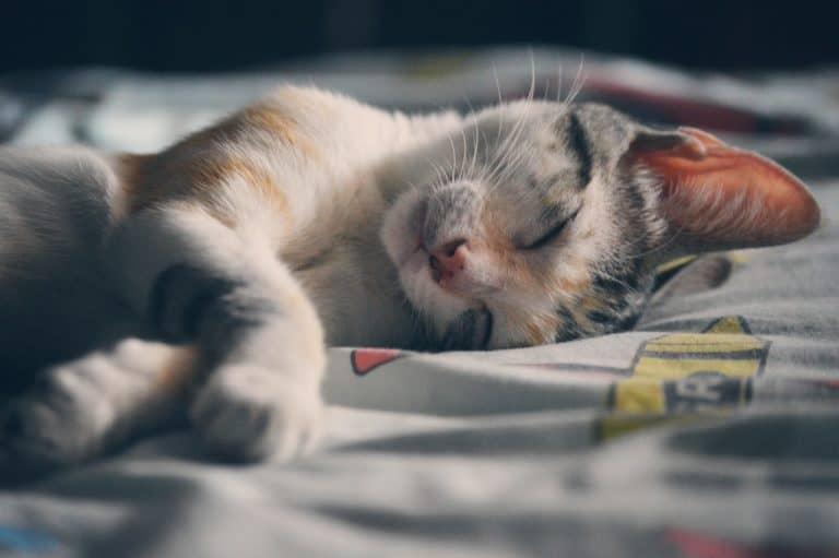 Katze schläft auf Bettwäsche