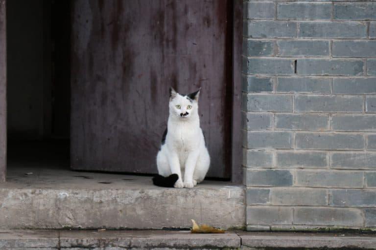 Katze sitzt vor Holztür auf Steinstufe