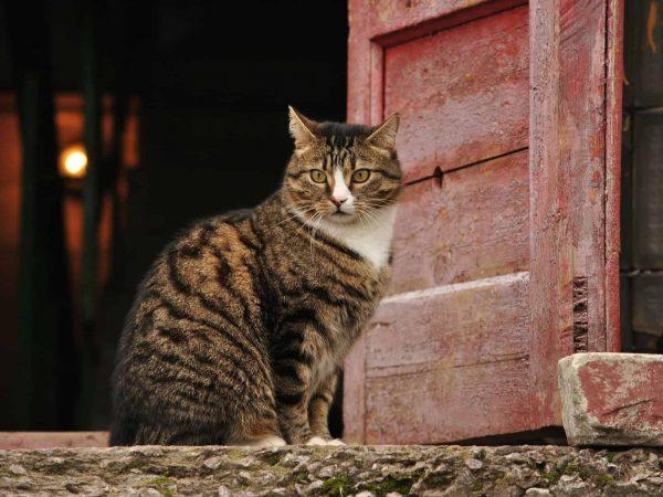 Katzenklappe: Test & Empfehlungen (01/20)