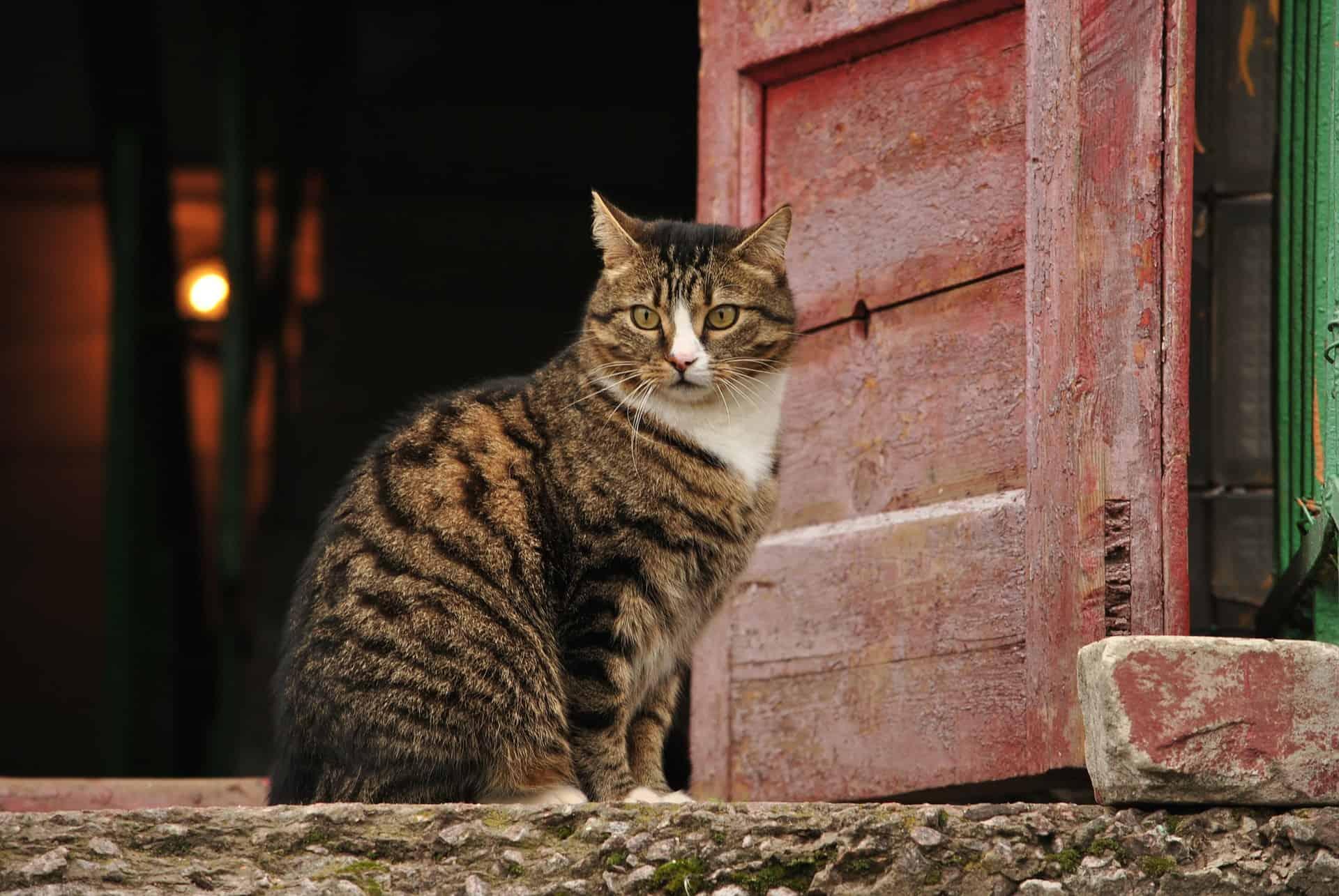 Katzenklappe: Test & Empfehlungen (11/20)