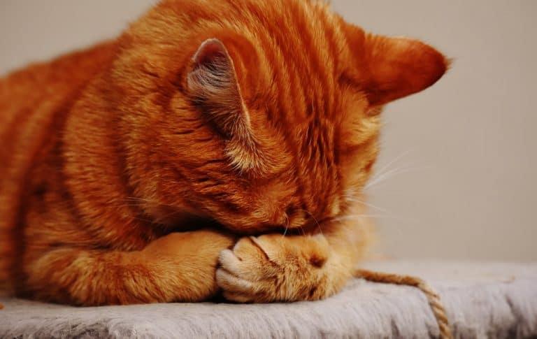 Katze beim Schlafen