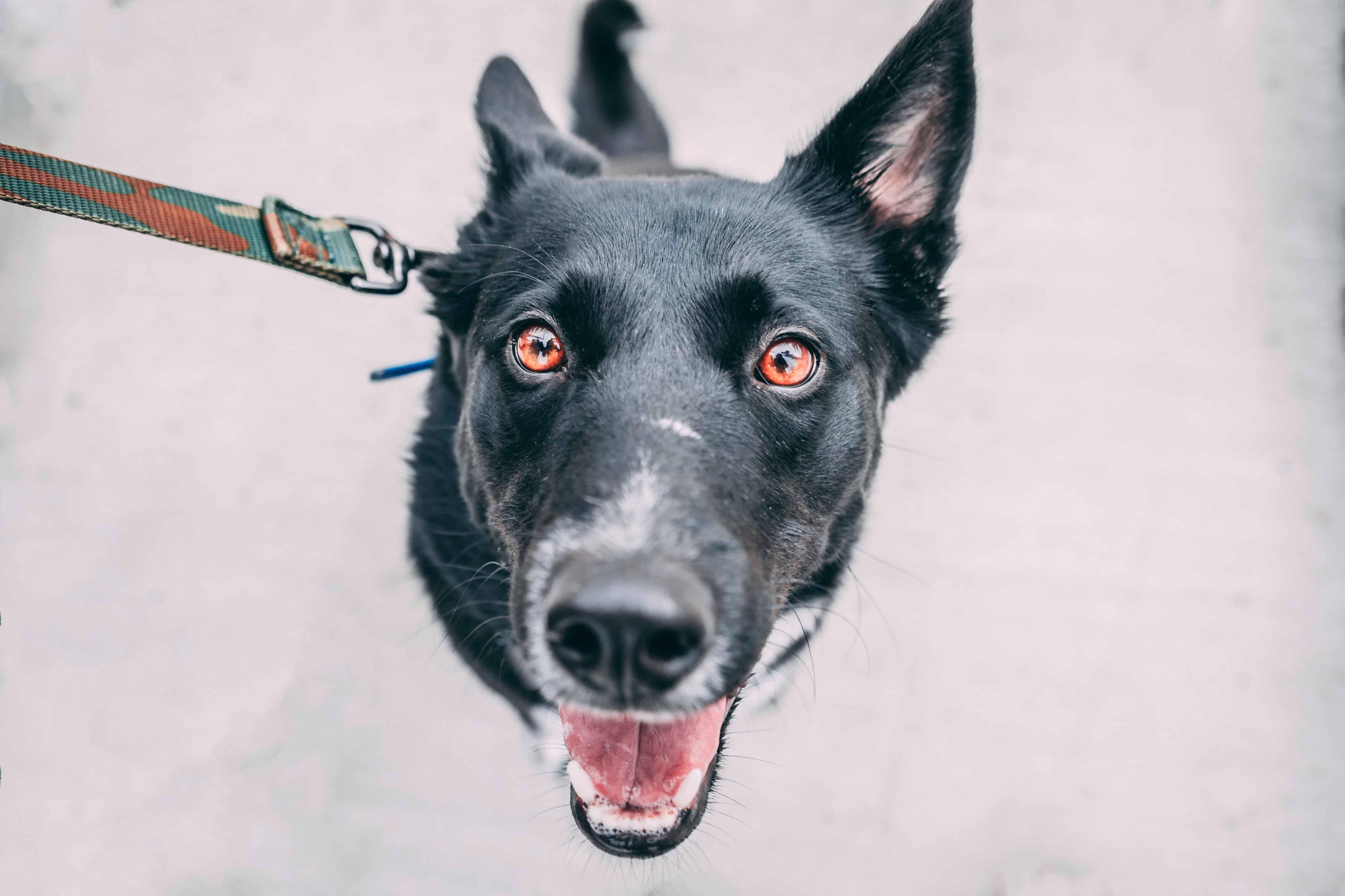 Balancekissen für Hunde: Trainingsmöglichkeit für deinen Vierbeiner