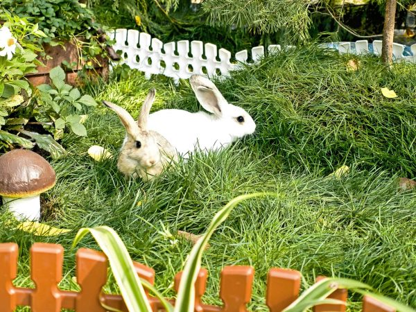 10936756 – two rabbits on green, juicy herb near by mushroom