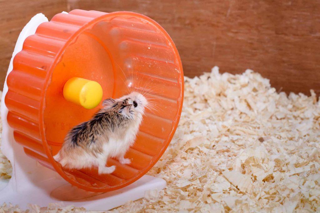 Wie viel geld kostet ein hamster