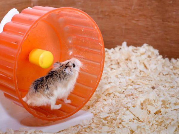Hamsterkäfig: Test & Empfehlungen (01/20)