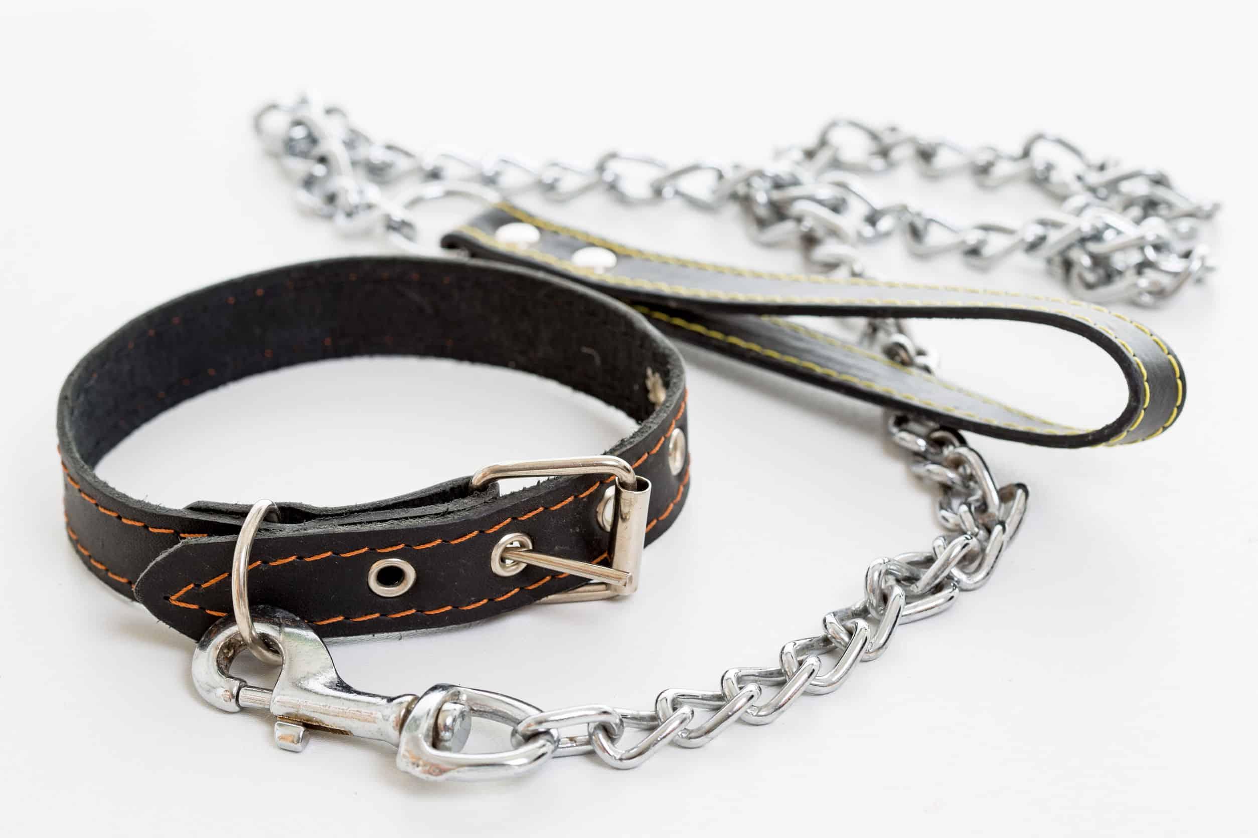 Hundehalsband: Test & Empfehlungen (04/21)