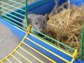 Mäusekäfig: Test & Empfehlungen (05/21)