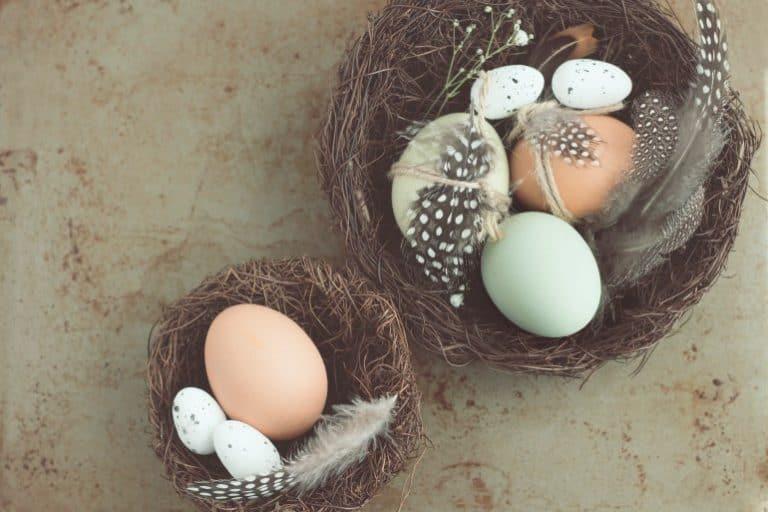 Zwei Nester, Stilleben