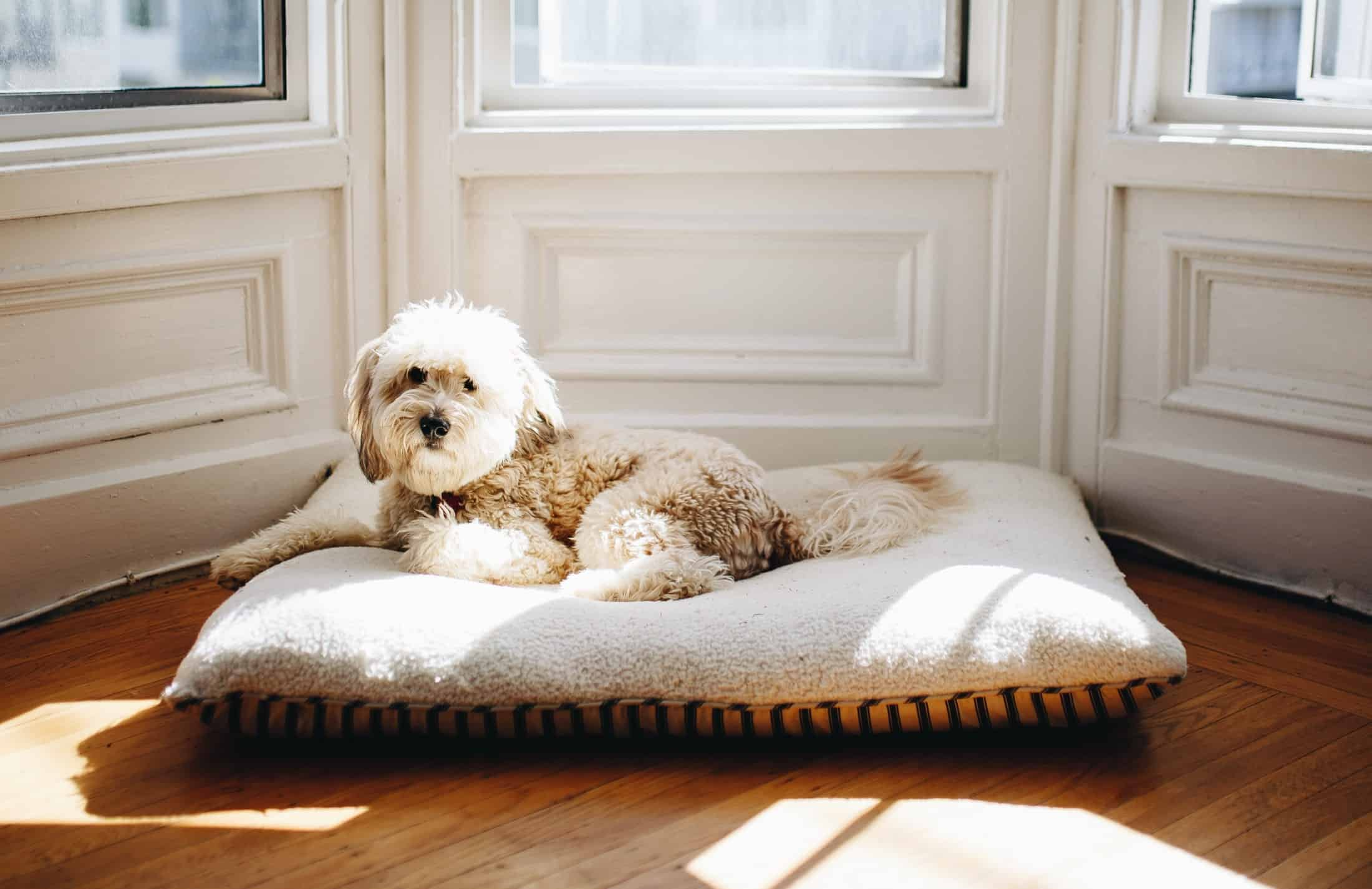 Hundebett: Test & Empfehlungen (04/21)