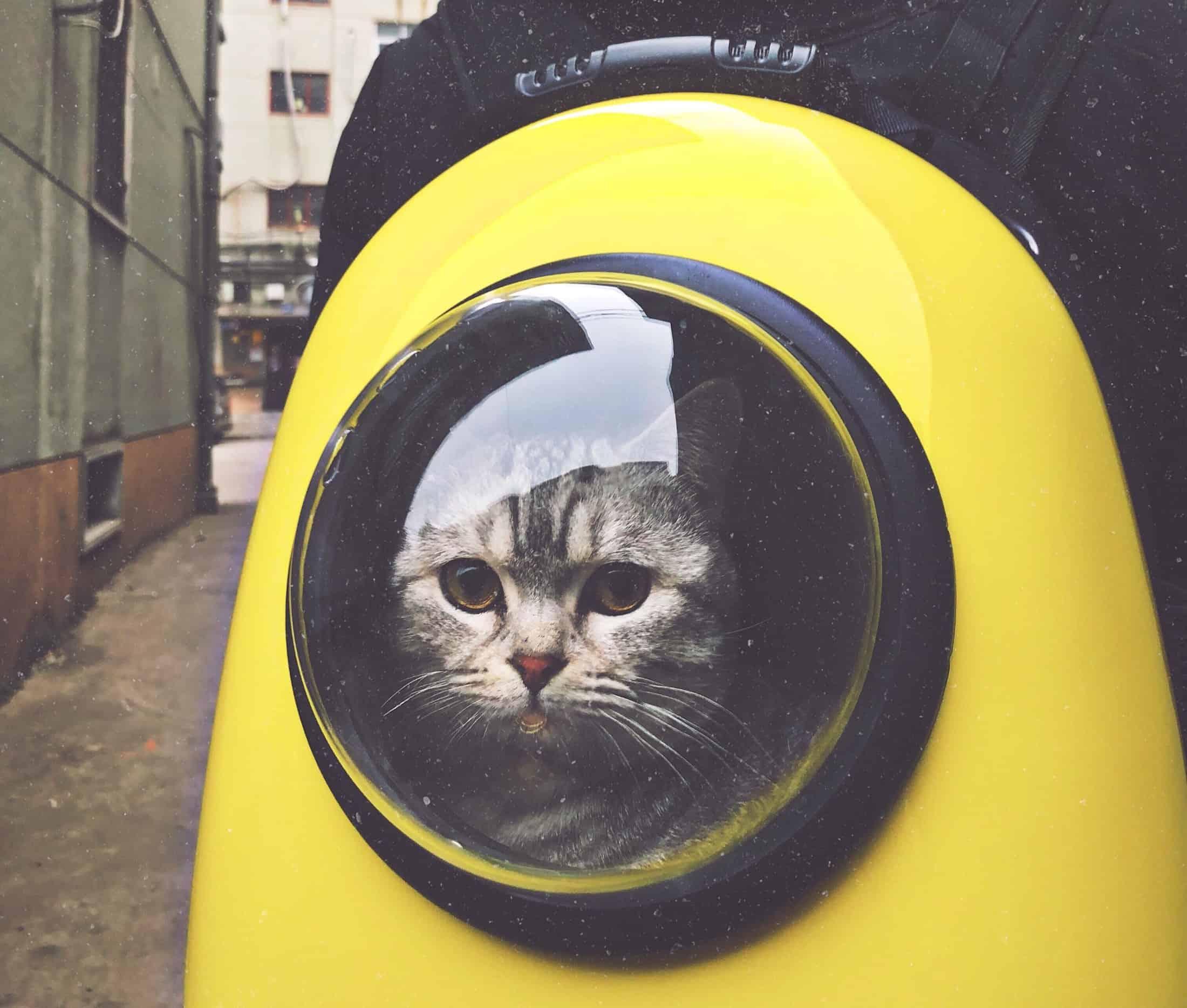 Katzenrucksack: Test & Empfehlungen (01/21)