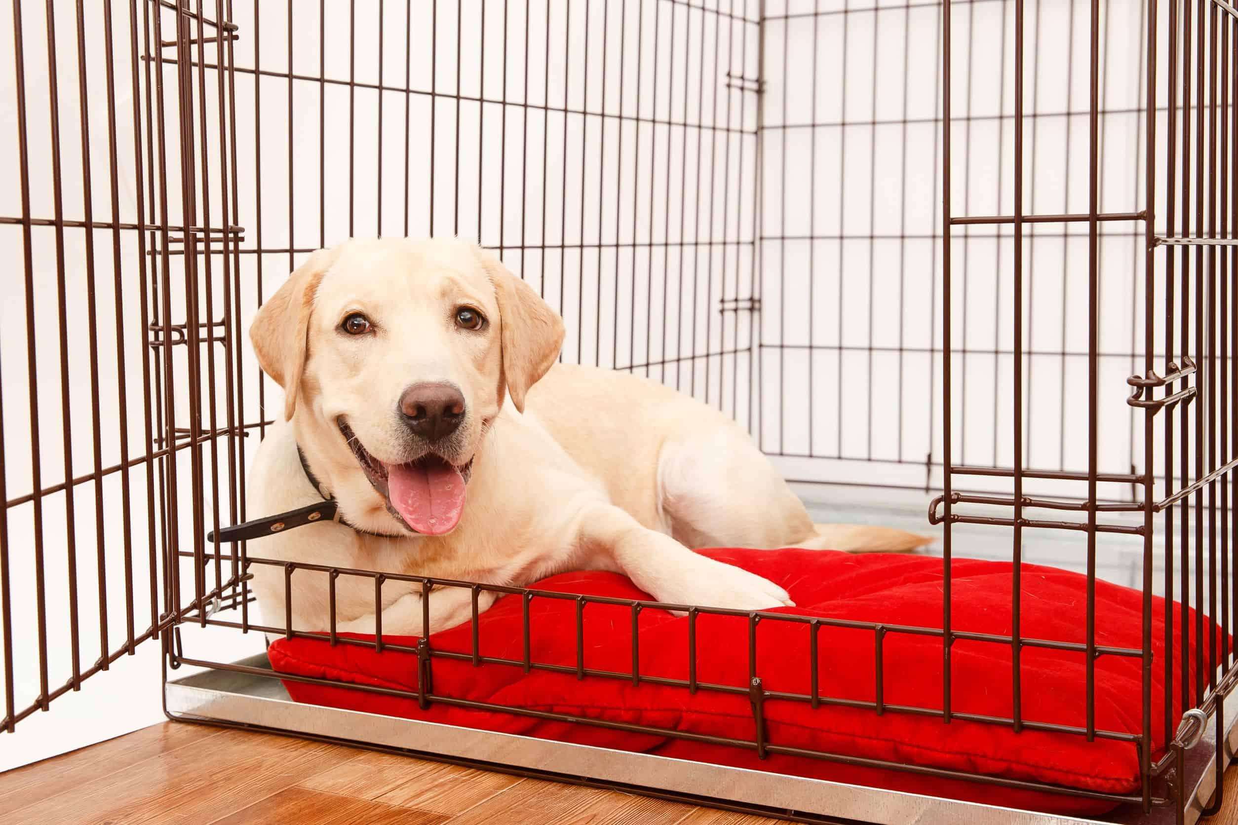Hundetransportbox: Test & Empfehlungen (07/21)