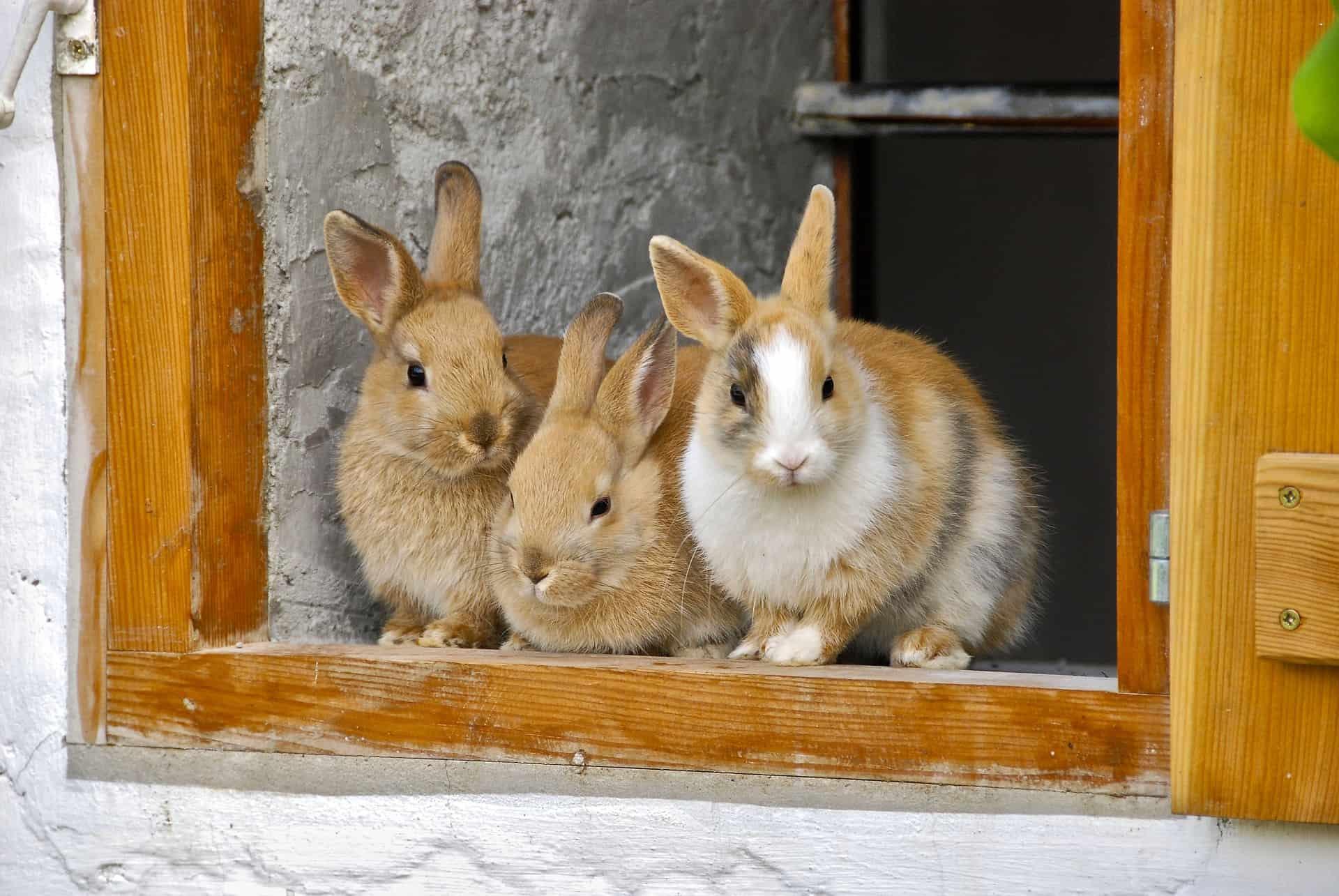 Wie du deinen Kaninchenstall winterfest machen kannst