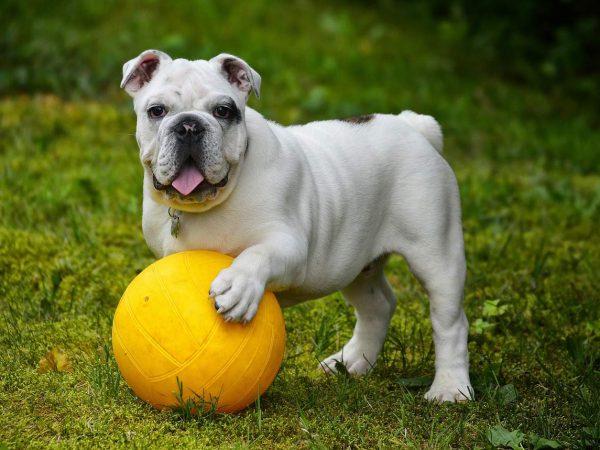 Diätfutter für Hunde: Test & Empfehlungen (01/20)