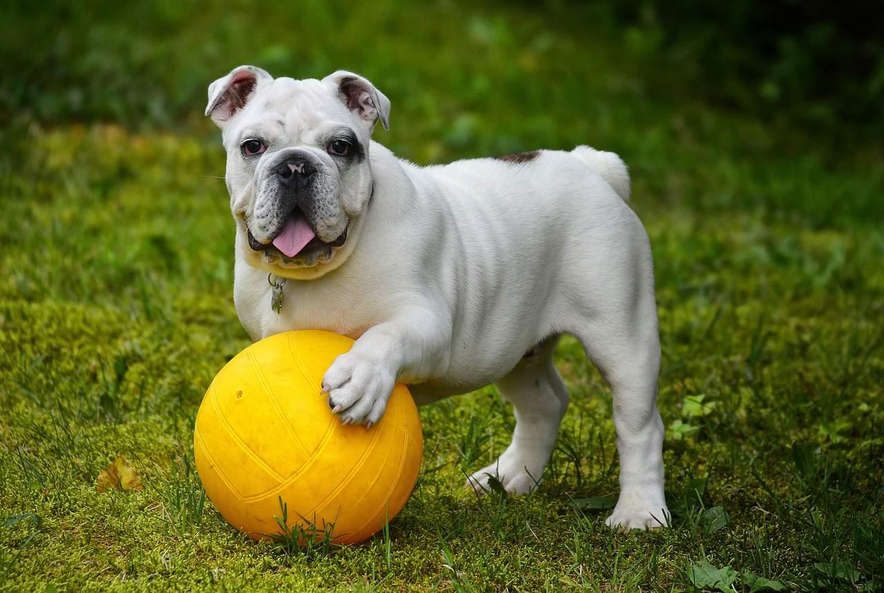 Diätfutter für Hunde: Test & Empfehlungen (07/20)