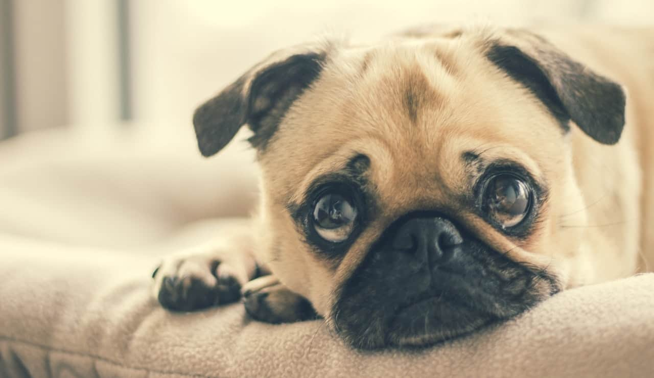 Schmerzmittel für Hunde: Test & Empfehlungen (03/21)