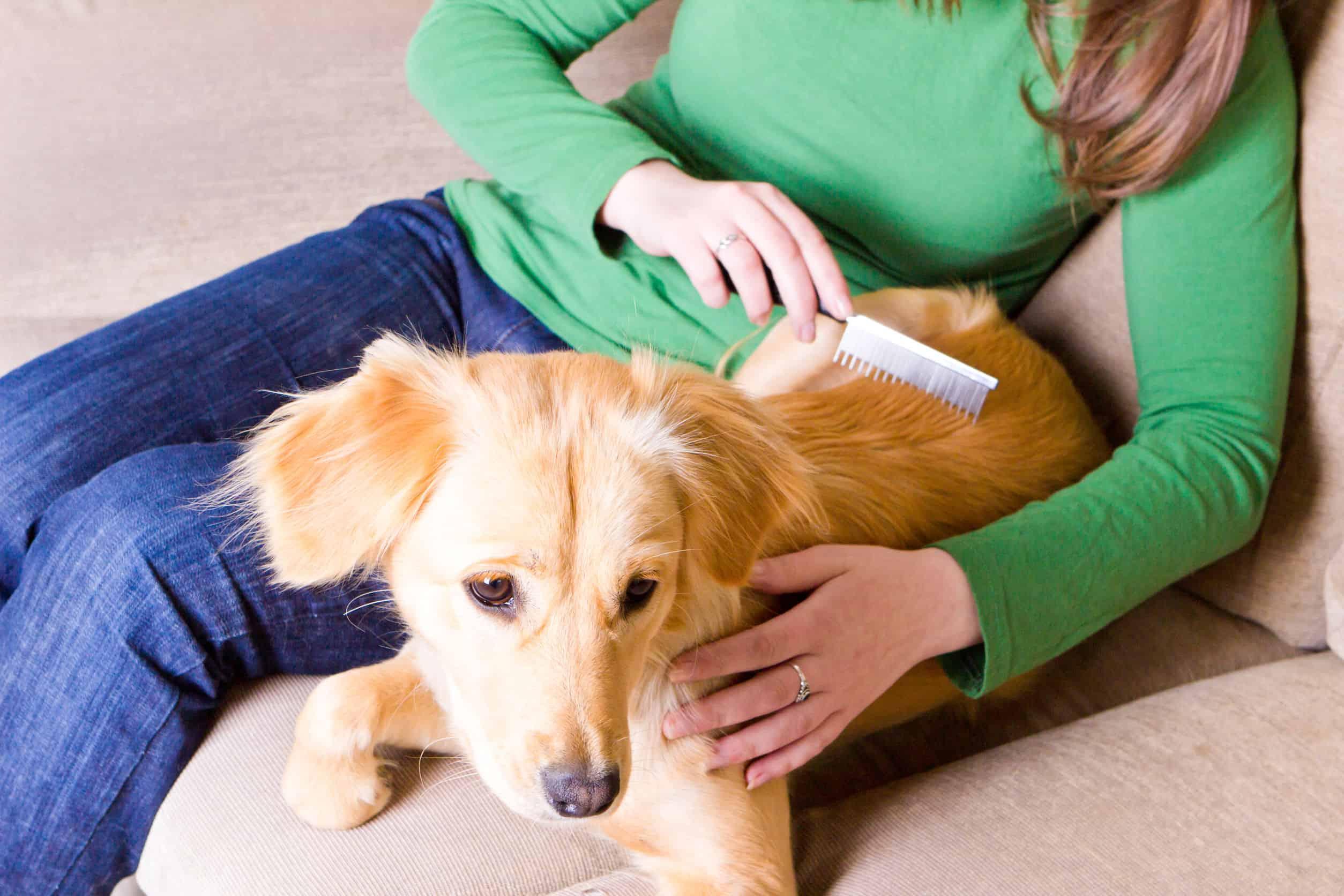 Hundebürste: Test & Empfehlungen (05/20)