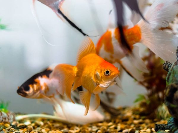 Goldfischglas: Test & Empfehlungen (01/20)