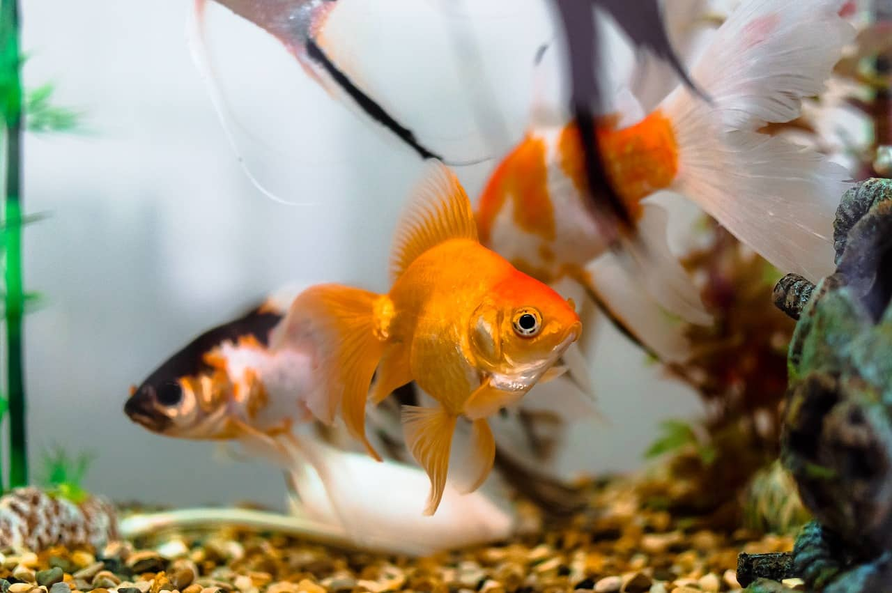 Goldfischglas: Test & Empfehlungen (11/20)