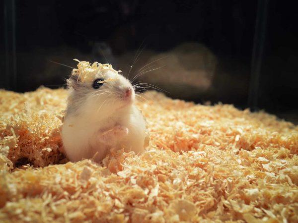 Hamster Terrarium: Test & Empfehlungen (01/20)