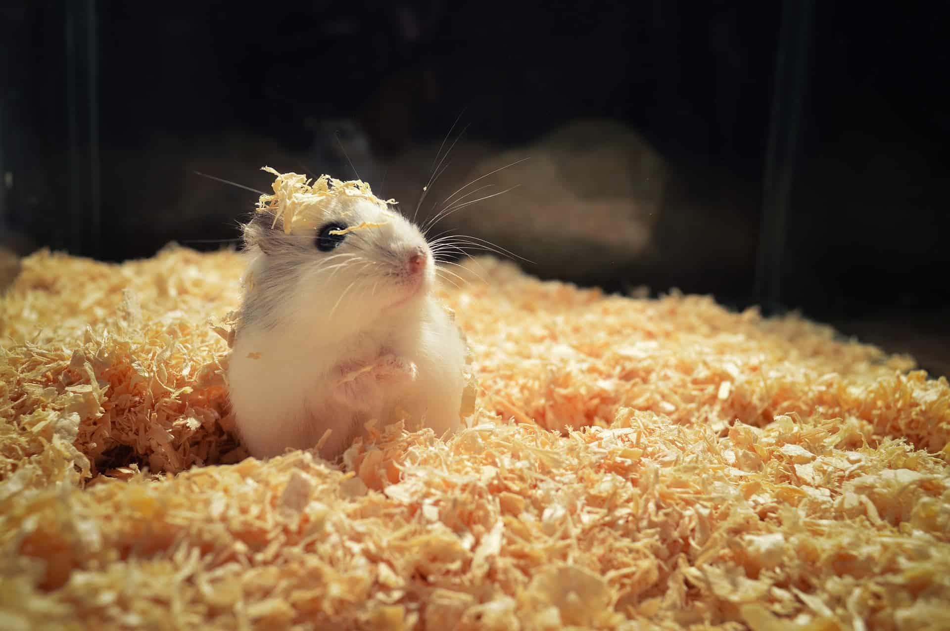 Hamster Terrarium: Test & Empfehlungen (07/20)