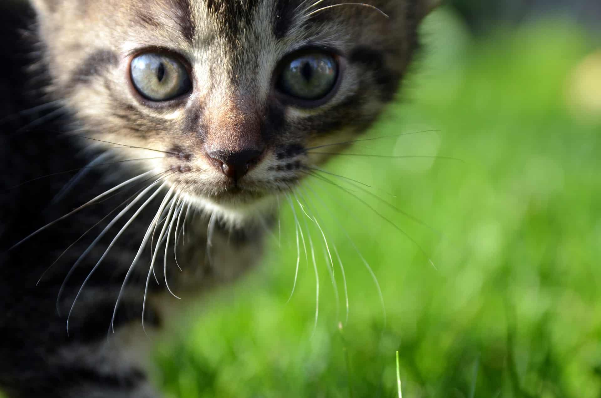 Katzenschreck: Test & Empfehlungen (11/20)