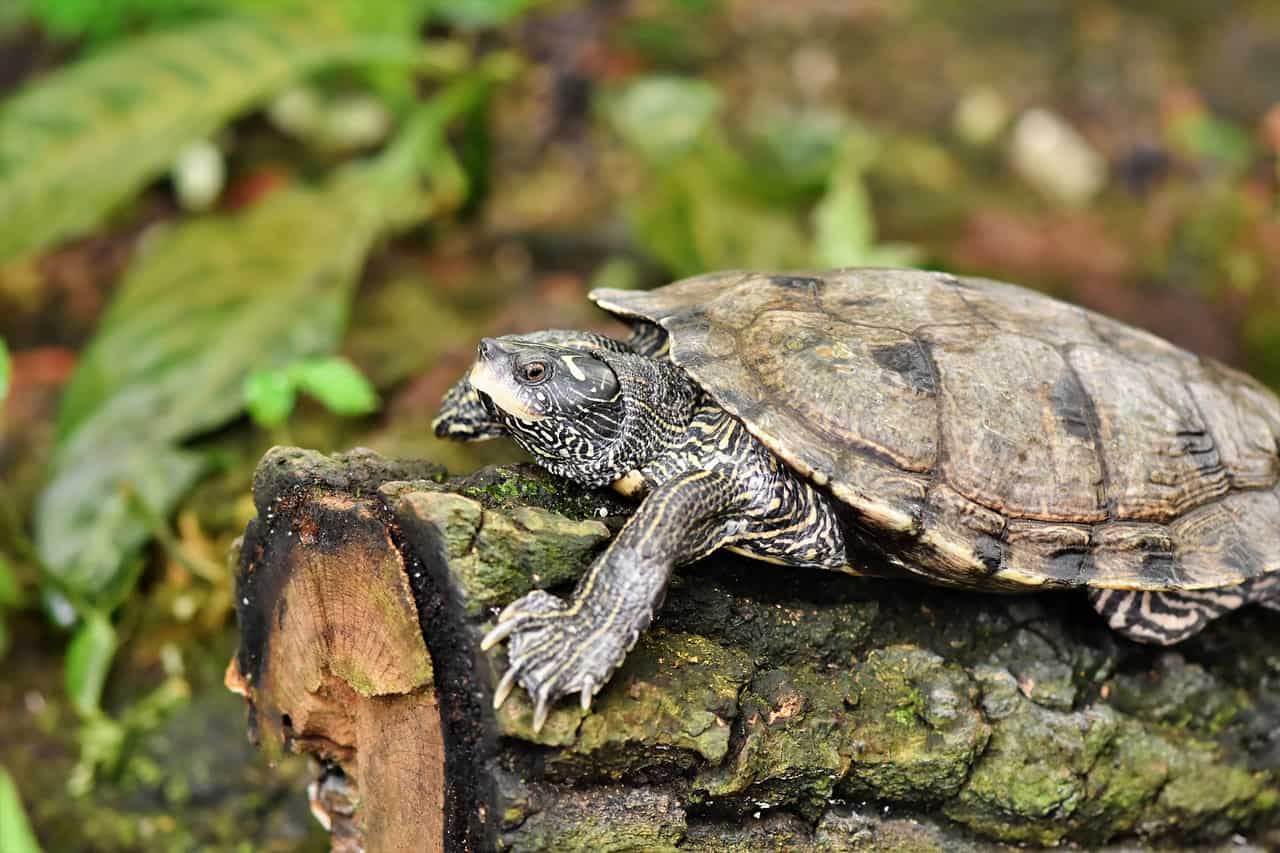 Schildkröten Terrarium: Test & Empfehlungen (01/20)