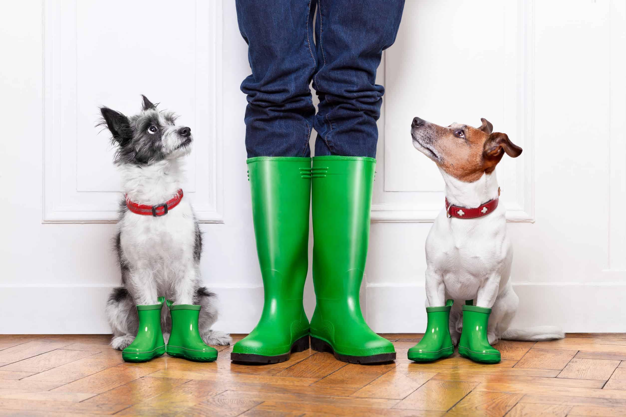 Hundeschuhe: Test & Empfehlungen (05/21)