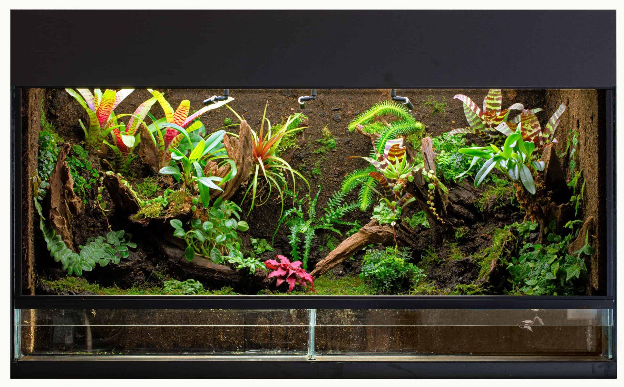 Insekten Terrarium: Test & Empfehlungen (04/21)