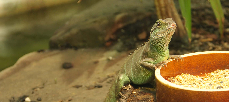 Gecko Terrarium: Test & Empfehlungen (01/21)