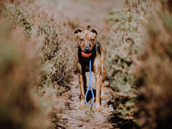 Hundefutterbeutel: Test & Empfehlungen (01/20)