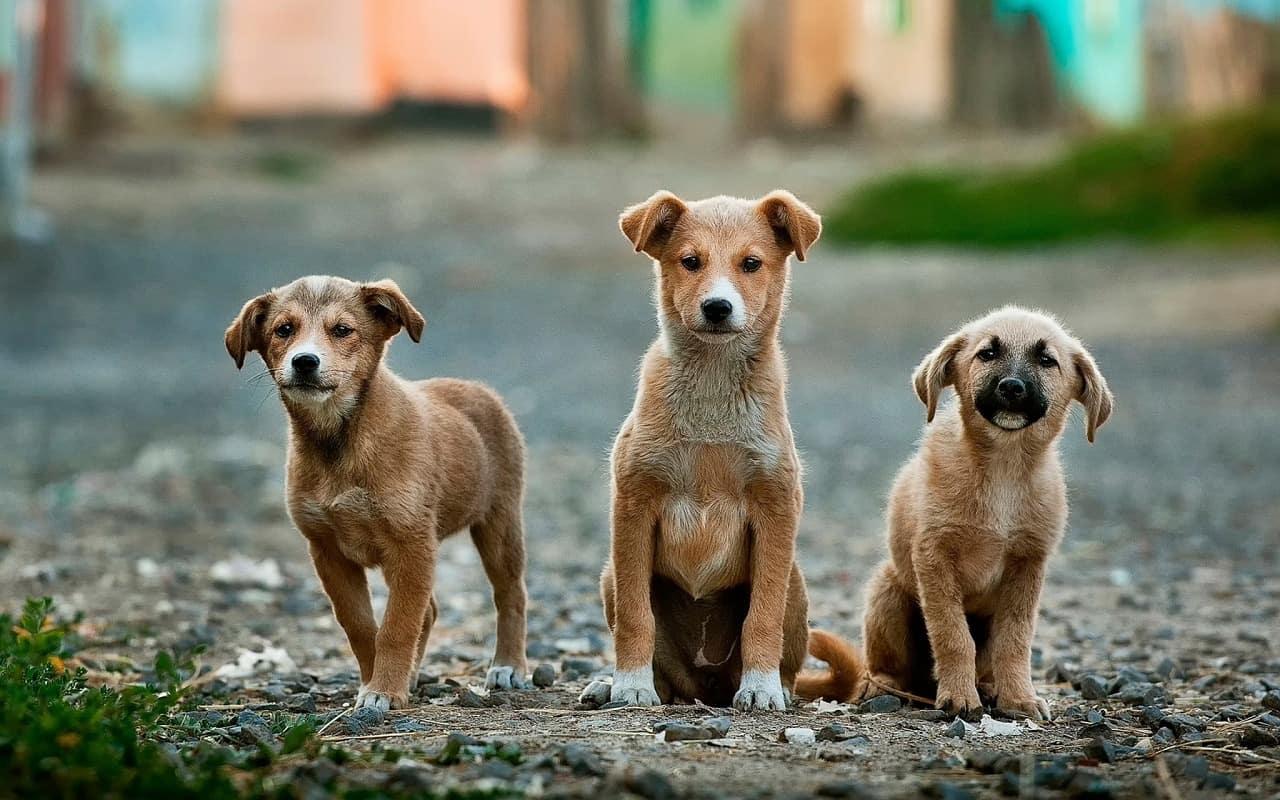 Hundetasche: Test & Empfehlungen (02/20)