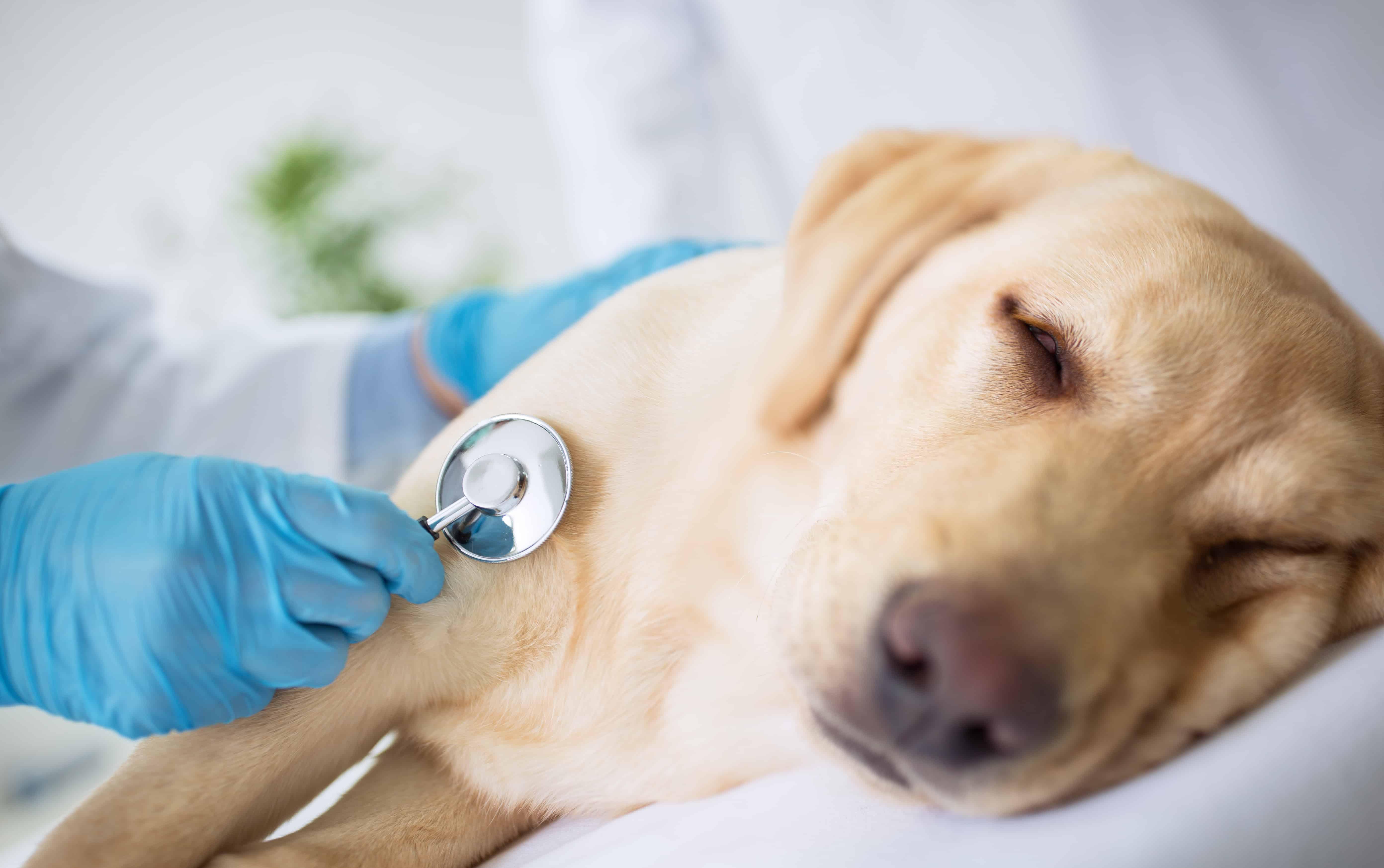 Hund Schnupfen: Erkältung erkennen und behandeln